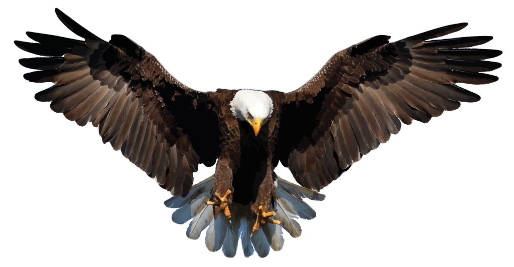 download bald eagle png background image 15185