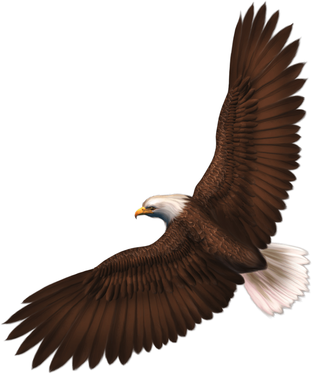 download eagle png image with transparency download png #15154