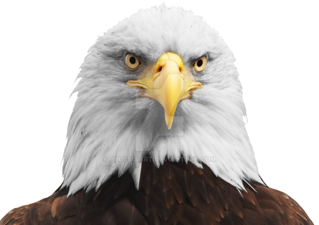 the head eagle transparent background #15150