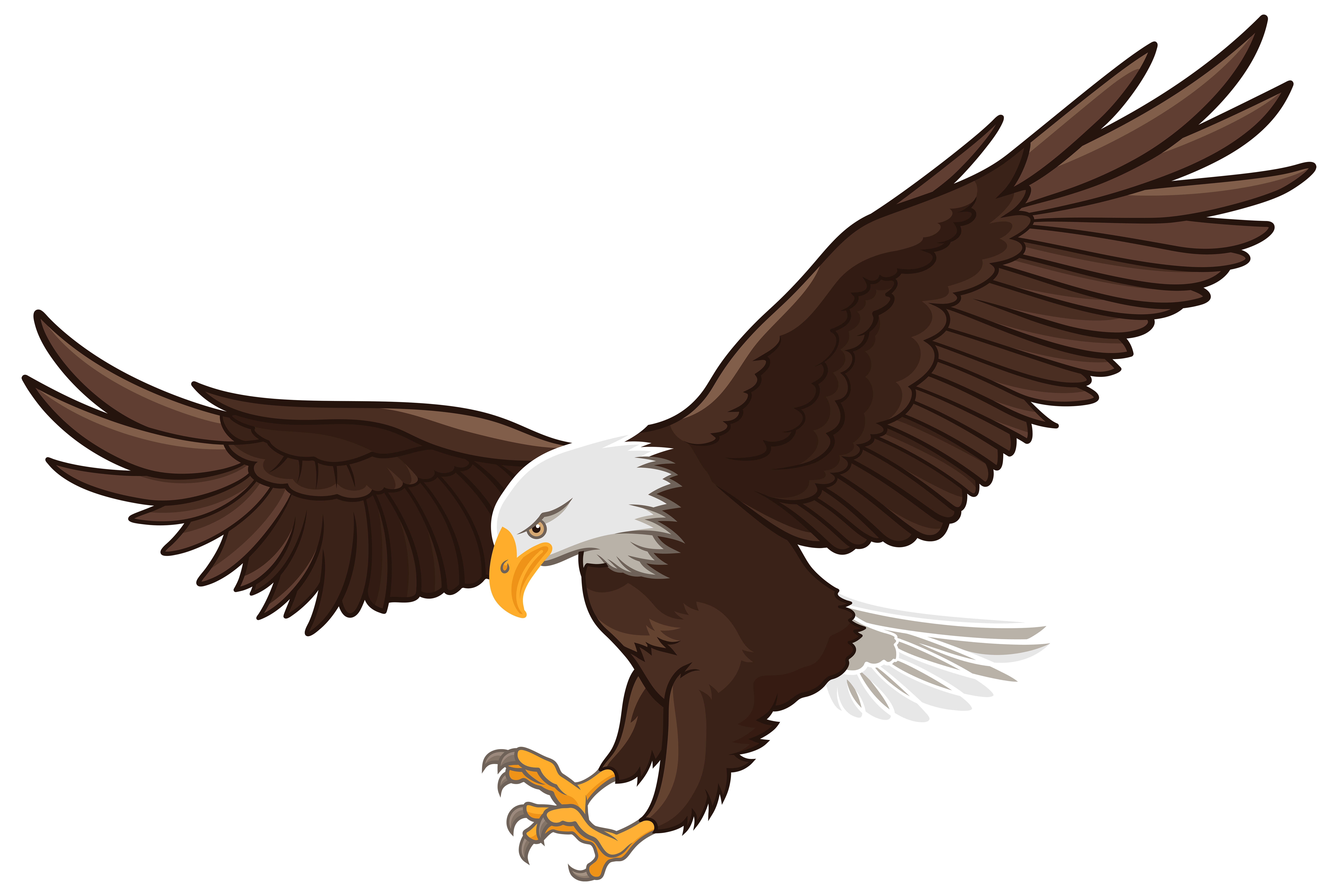 white tailed eagle clipart transparent pencil and #15187
