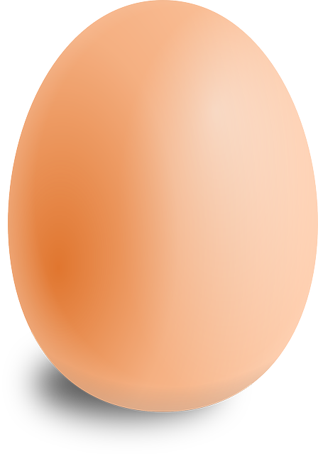 egg oval food vector graphic pixabay #14517