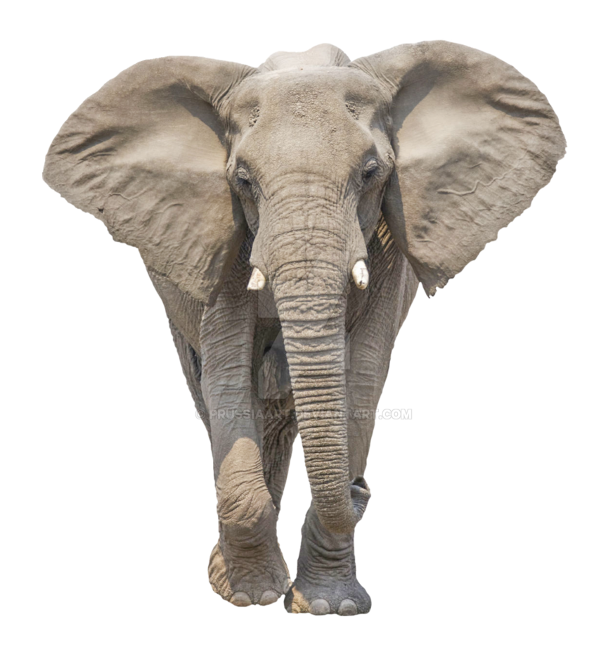 african elephant transparent background #15809