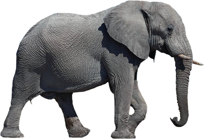 black elephant png transparent image #15798