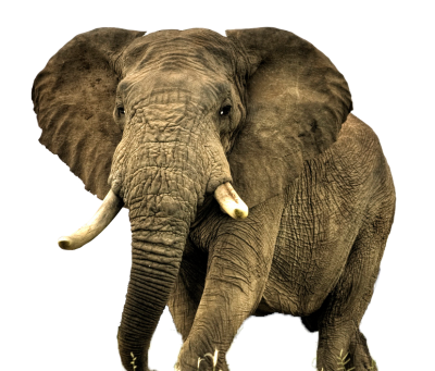 download elephant png transparent image and clipart #15815