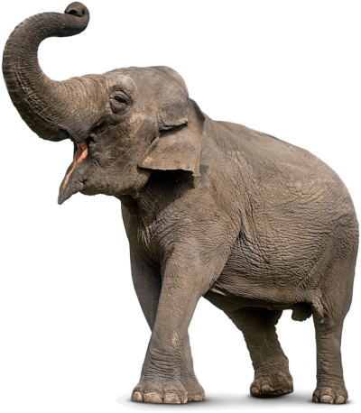download elephant png transparent image and clipart #15787