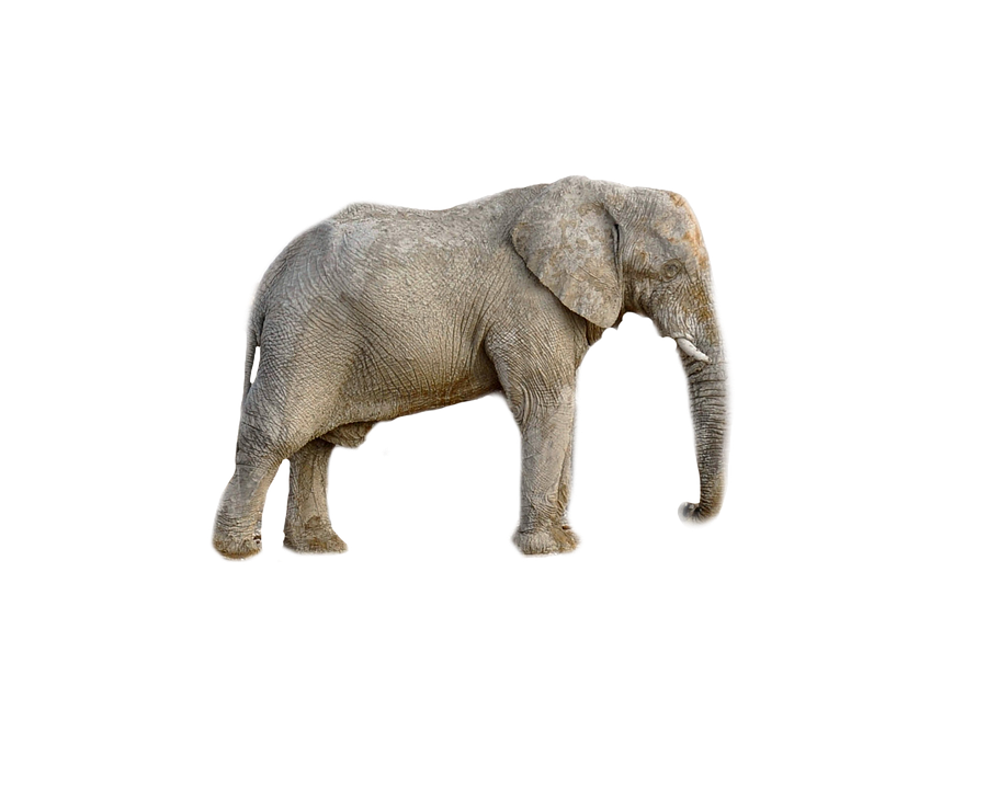 elephant animal africa transparent photo pixabay #15849