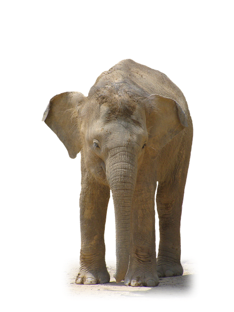 elephant animal african photo pixabay #15821