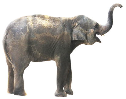 elephant, animal clip art #15833