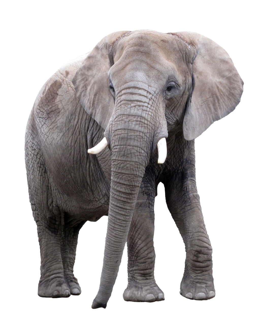 Elephant Png Elephant Animal African Photos Free Transparent Png Logos To created add 34 pieces, transparent elephant images of your project files with the background cleaned. elephant png elephant animal african