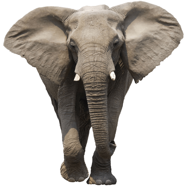 elephant face transparent png stickpng #15842