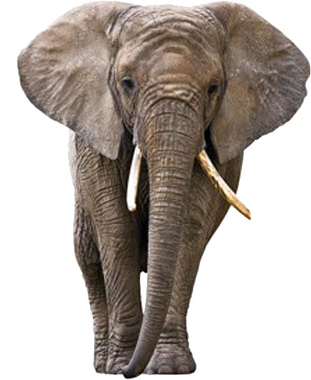 elephant long tusks png image #15826