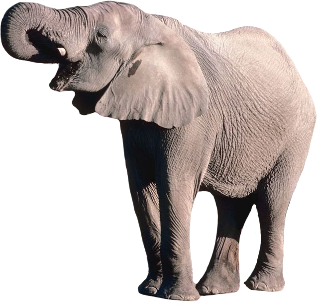 Elephant Png Elephant Animal African Photos Free Transparent Png Logos If you like, you can download pictures in icon format or directly in png image format. elephant png elephant animal african