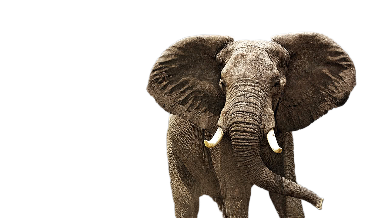 Elephant Png Elephant Animal African Photos Free Transparent Png Logos Elephant png free vector we have about (61,541 files) free vector in ai, eps, cdr, svg vector illustration graphic art design format. elephant png elephant animal african