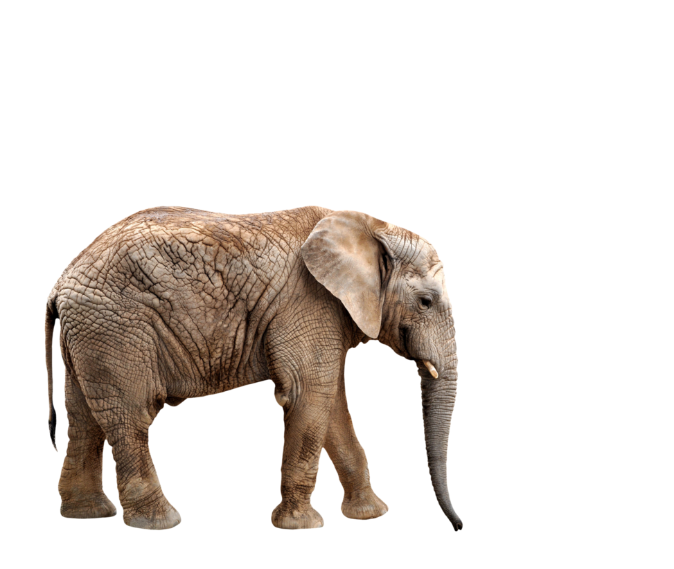 Elephant Png Elephant Animal African Photos Free Transparent Png Logos Discover 1582 free elephant png images with transparent backgrounds. elephant png elephant animal african