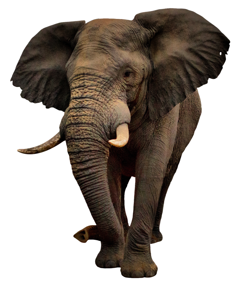 Elephant Png Elephant Animal African Photos Free Transparent Png Logos 17,000+ vectors, stock photos & psd files. elephant png elephant animal african