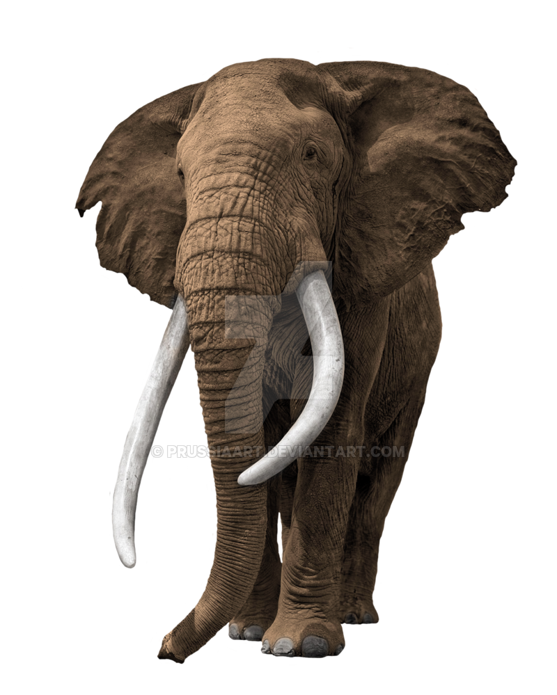 elephant transparent background prussiaart #15847