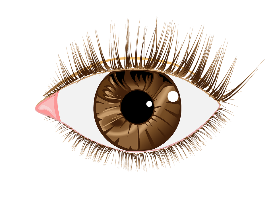 eye brown lashes image pixabay #10695