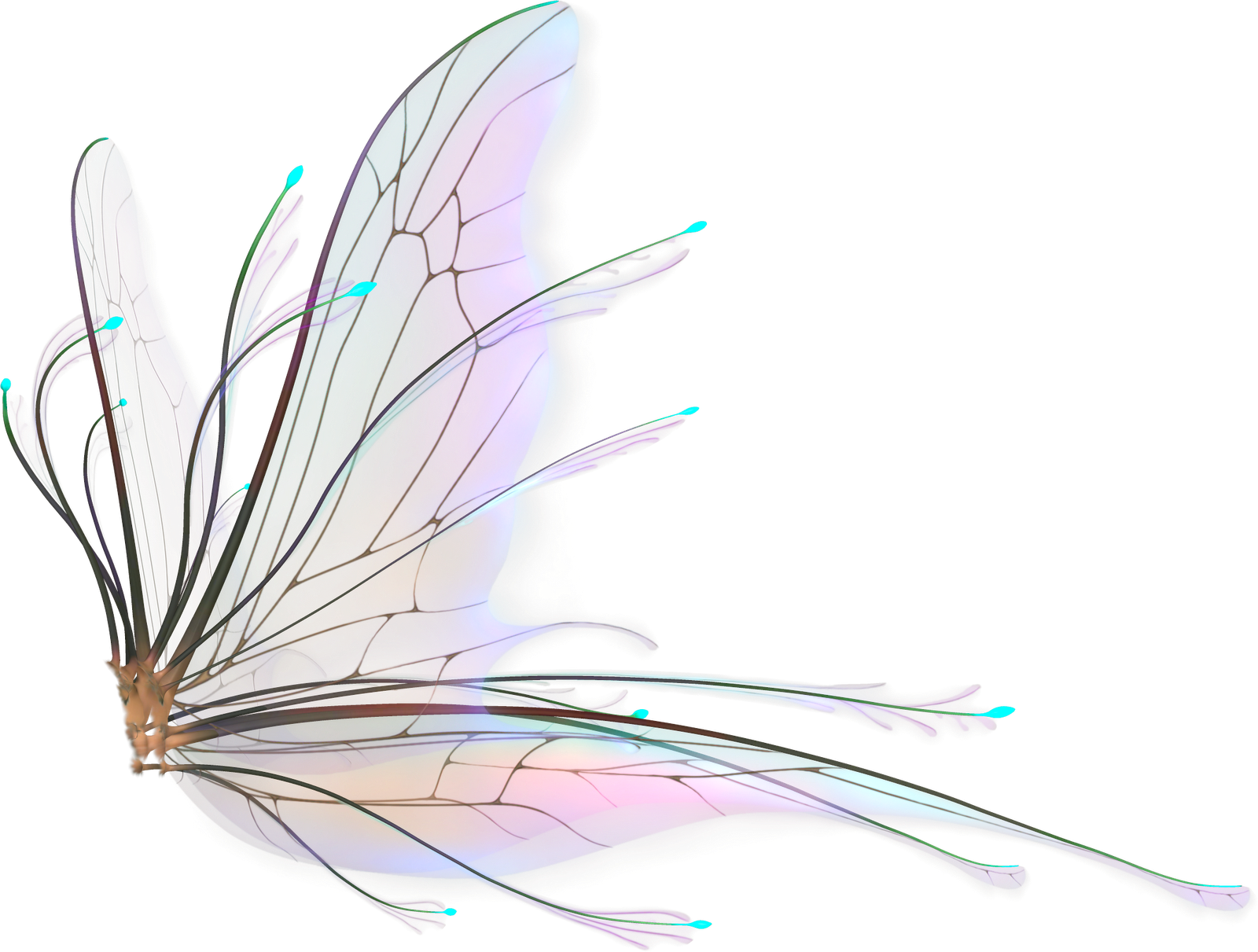 fairy wings transparent png pictures icons and png #28637