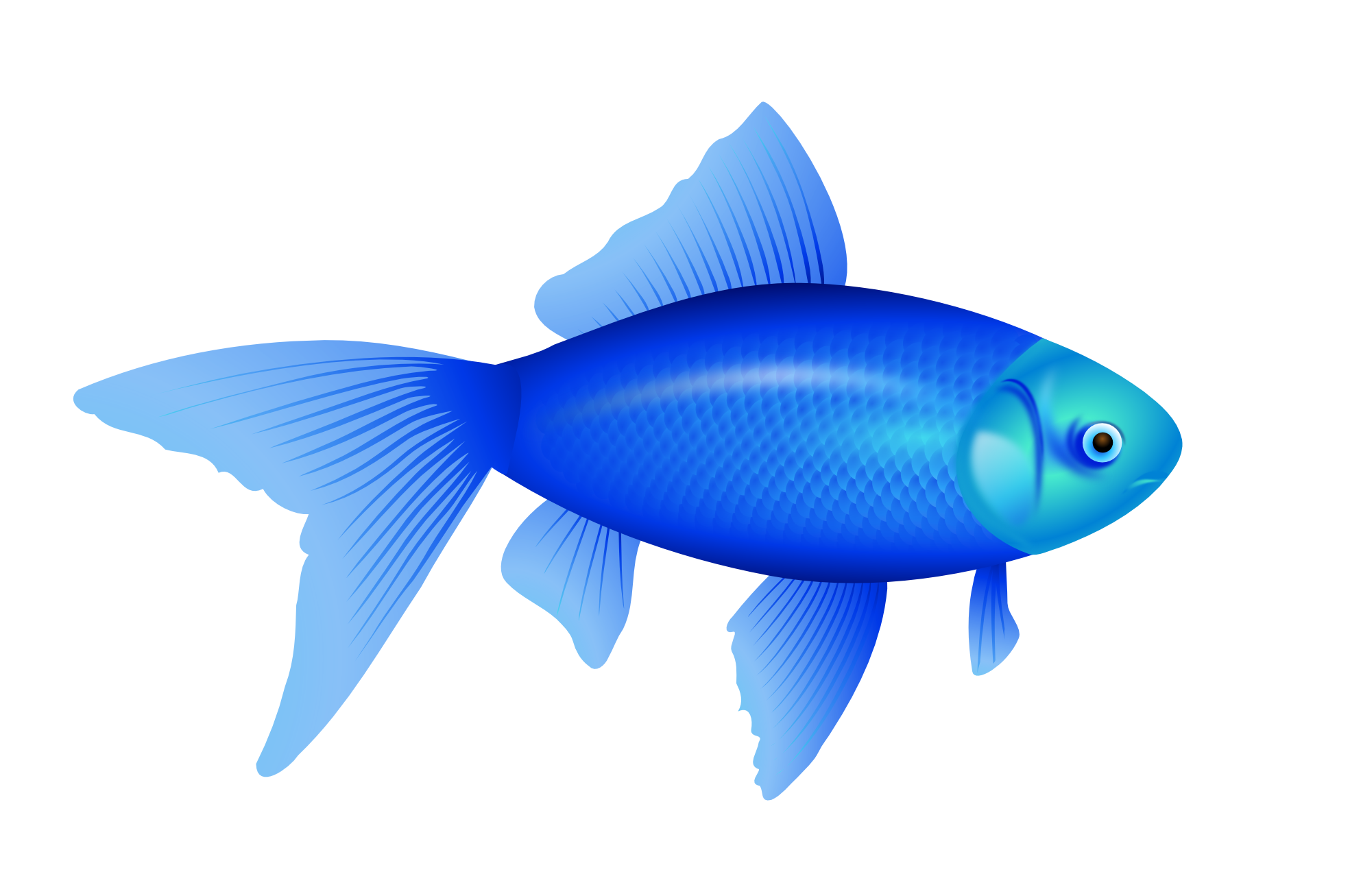 Png Images Of Fish Fish Transparent Pictures Free Download Free Transparent Png Logos