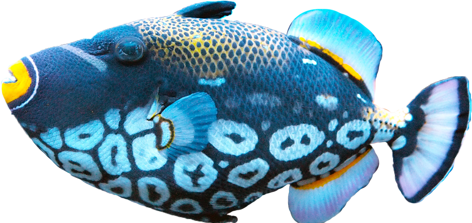 fish png images transparent pictures png only 11965