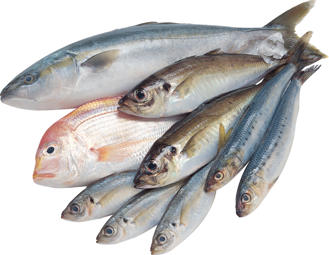 fish png photo transparent download