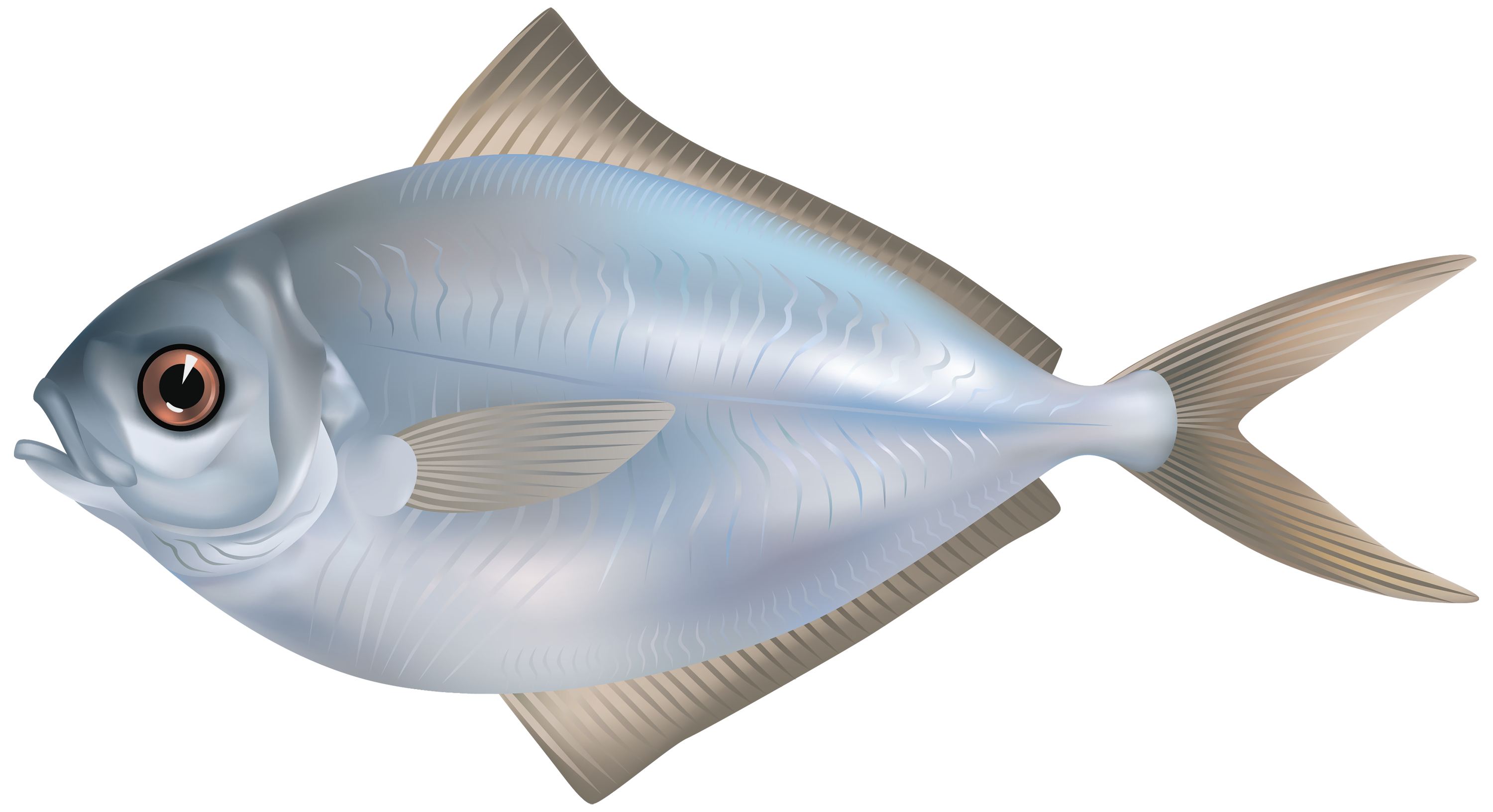 grey butter fish png clipart image best web clipart 11976