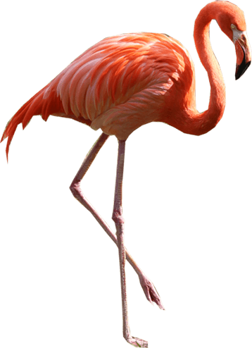 flamingo png image cut outs image props pngs #23098