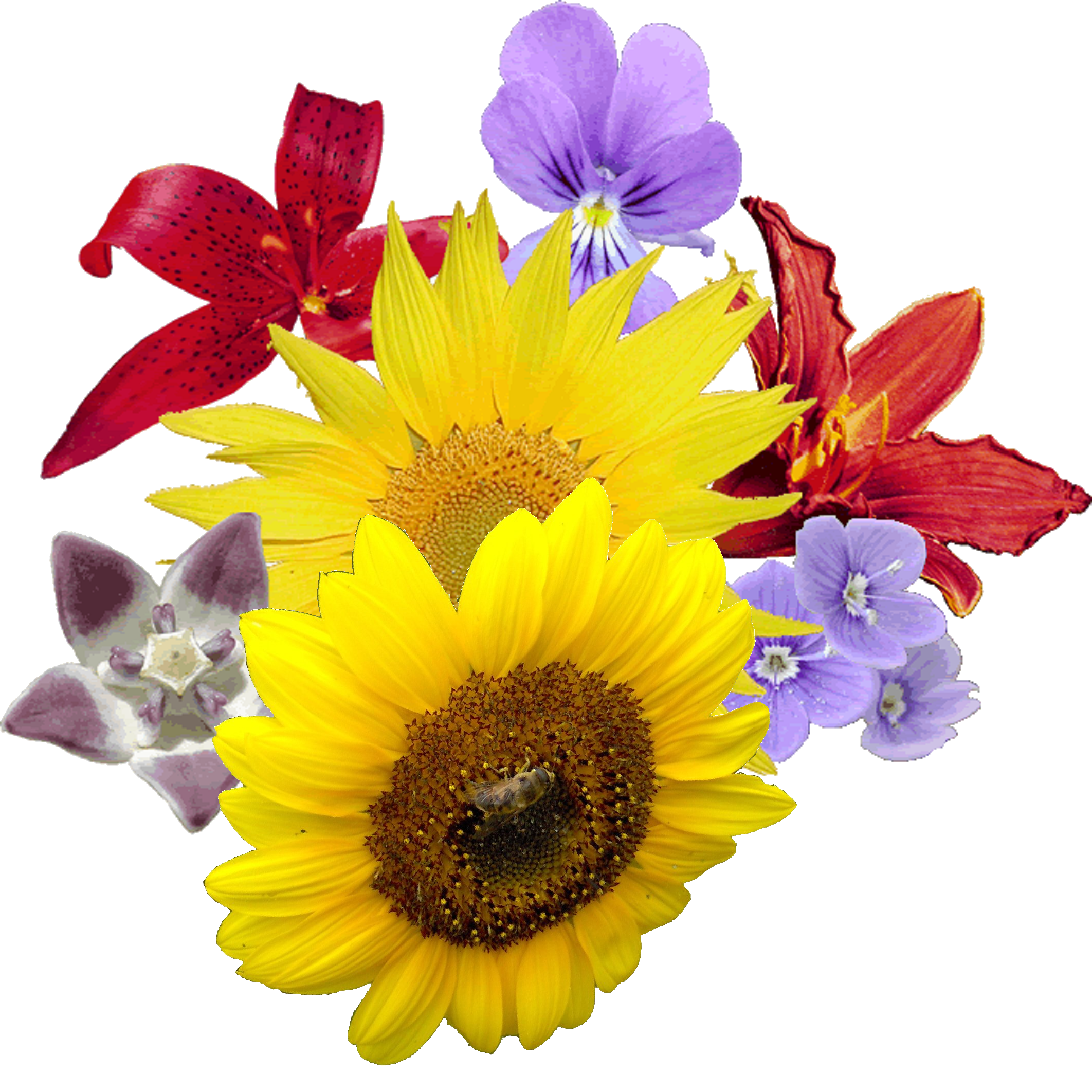flour flower pictures png #37429