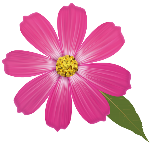flour pink flower png clipart high quality png #37427