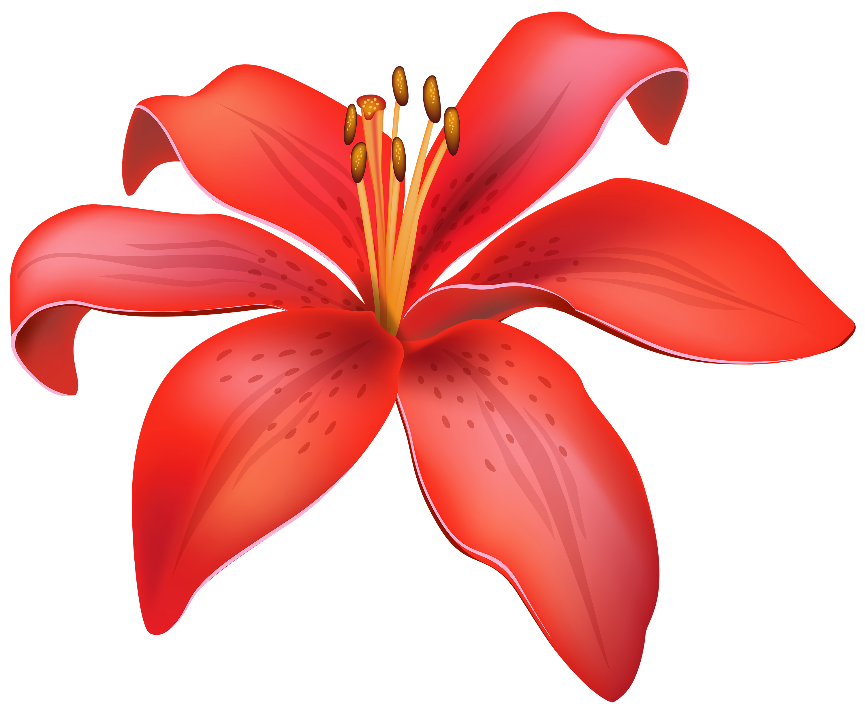 flour red lily flower png clipart high quality png #37424