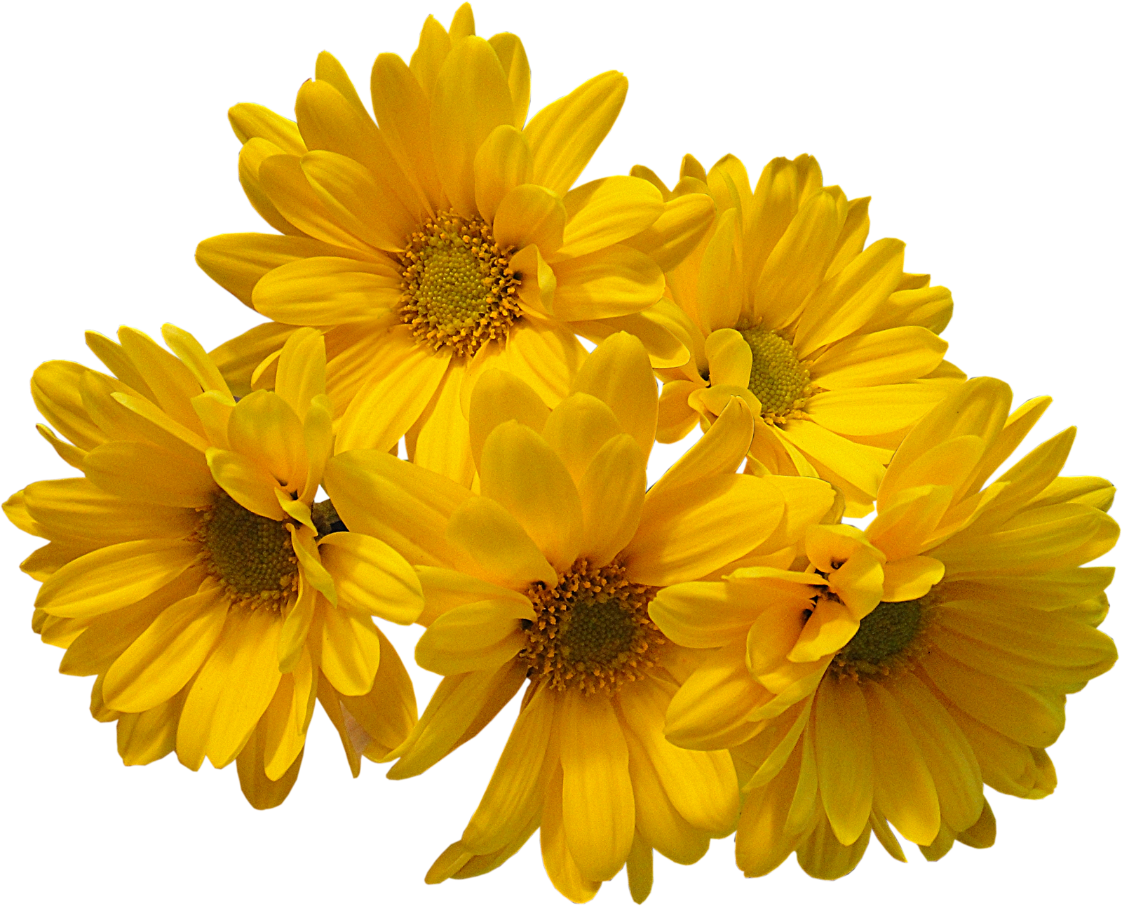 download yellow flowers bouquet transparent image #8184