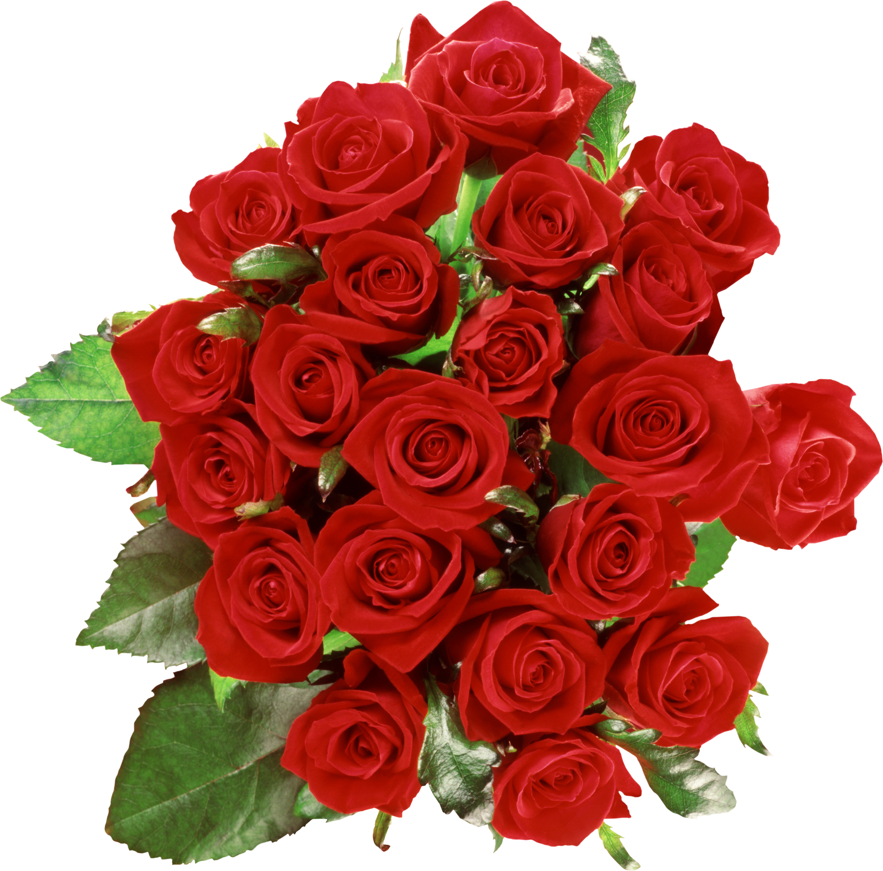 flower transparent flower images red roses #8167
