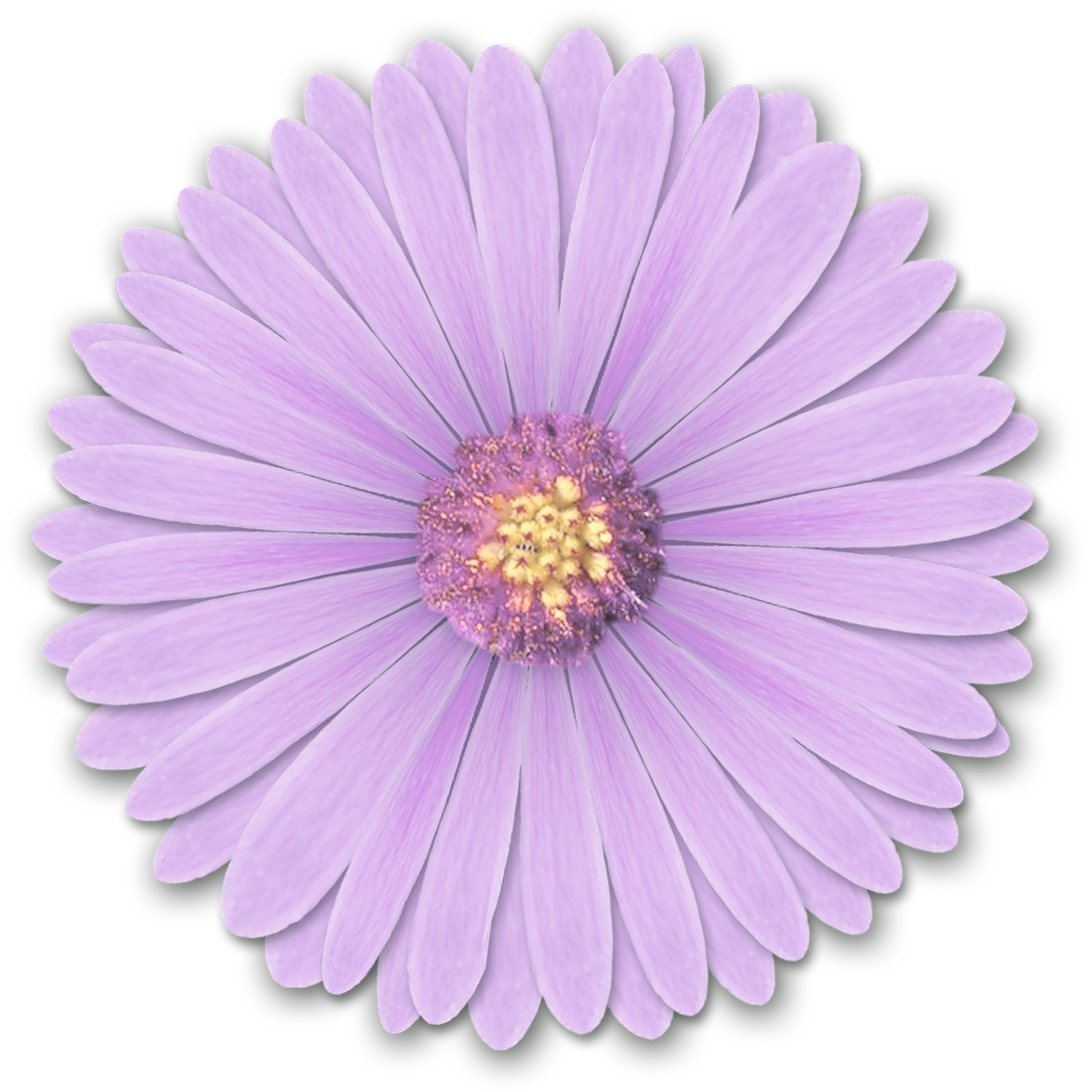 realistic flower, purple, lilac flower #8168