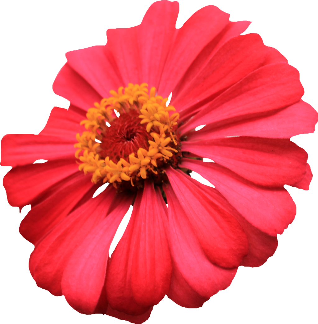 transparent single flower images #8179