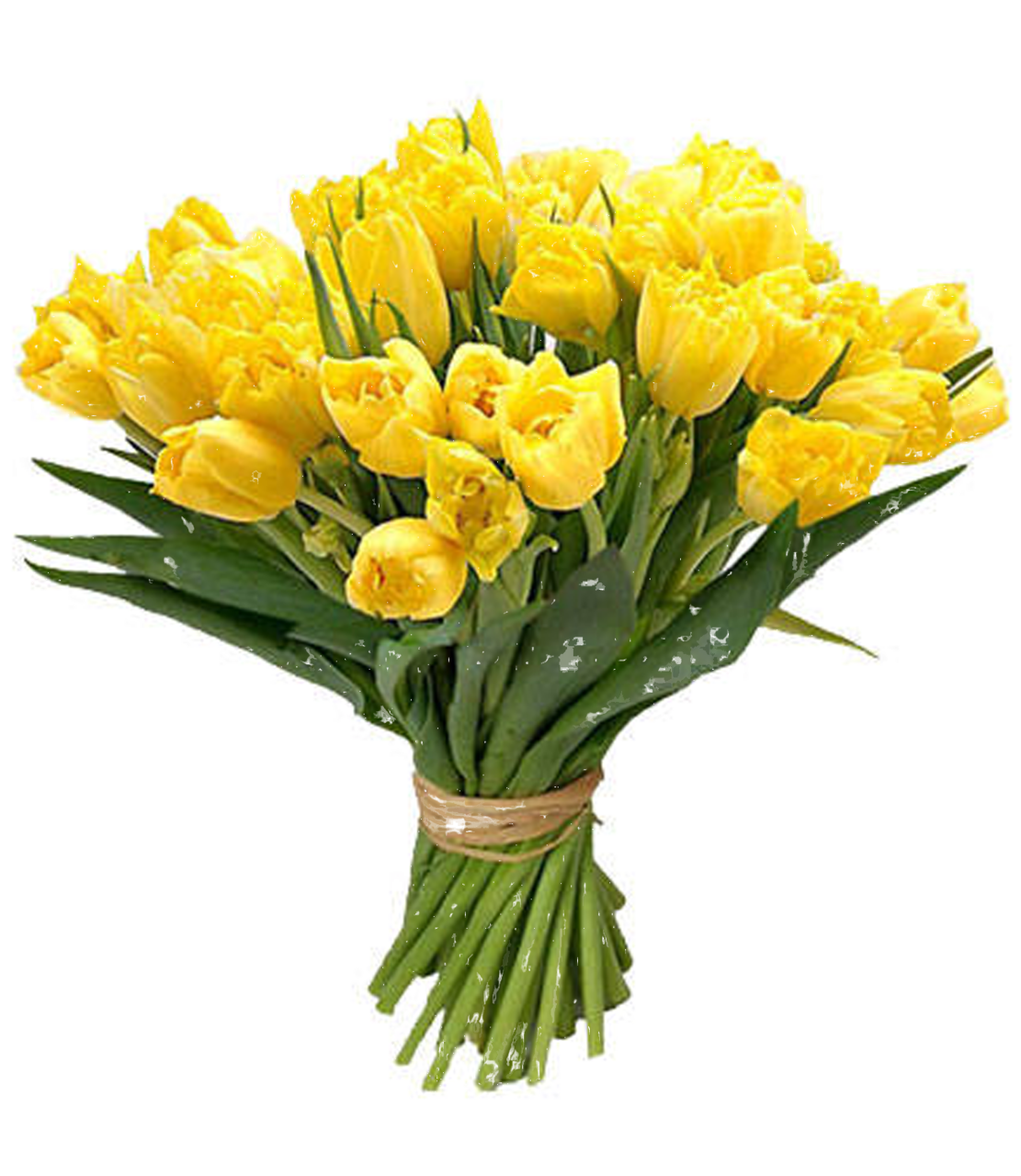 yellow roses bouquet flowers images download #8196