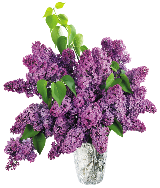 flower vase, vase with purple lilac png clipart picture gallery yopriceville high quality images and #28631