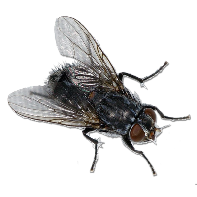 black fly png transparent images #35340