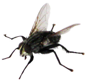fly animal clip art #35350