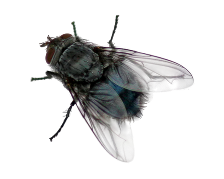 fly black png transparent images #35342
