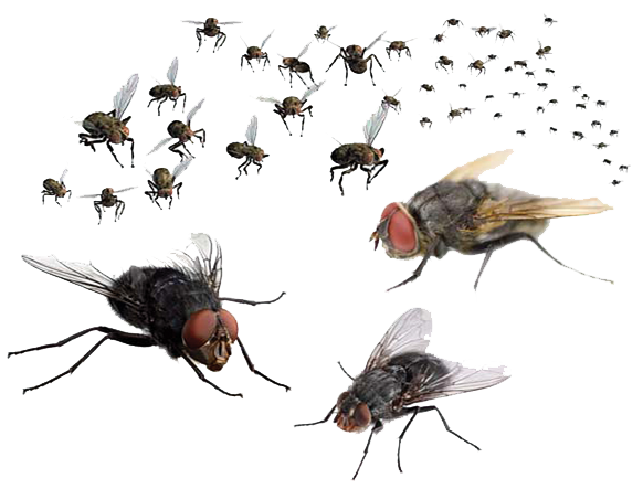 fly png download png mart #35357