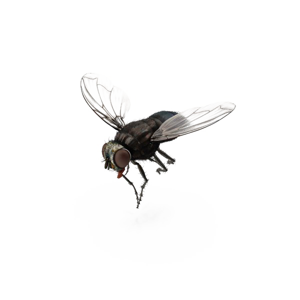fly png images transparent background png play #35355