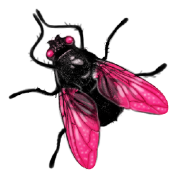 fly png images transparent background png play #35372