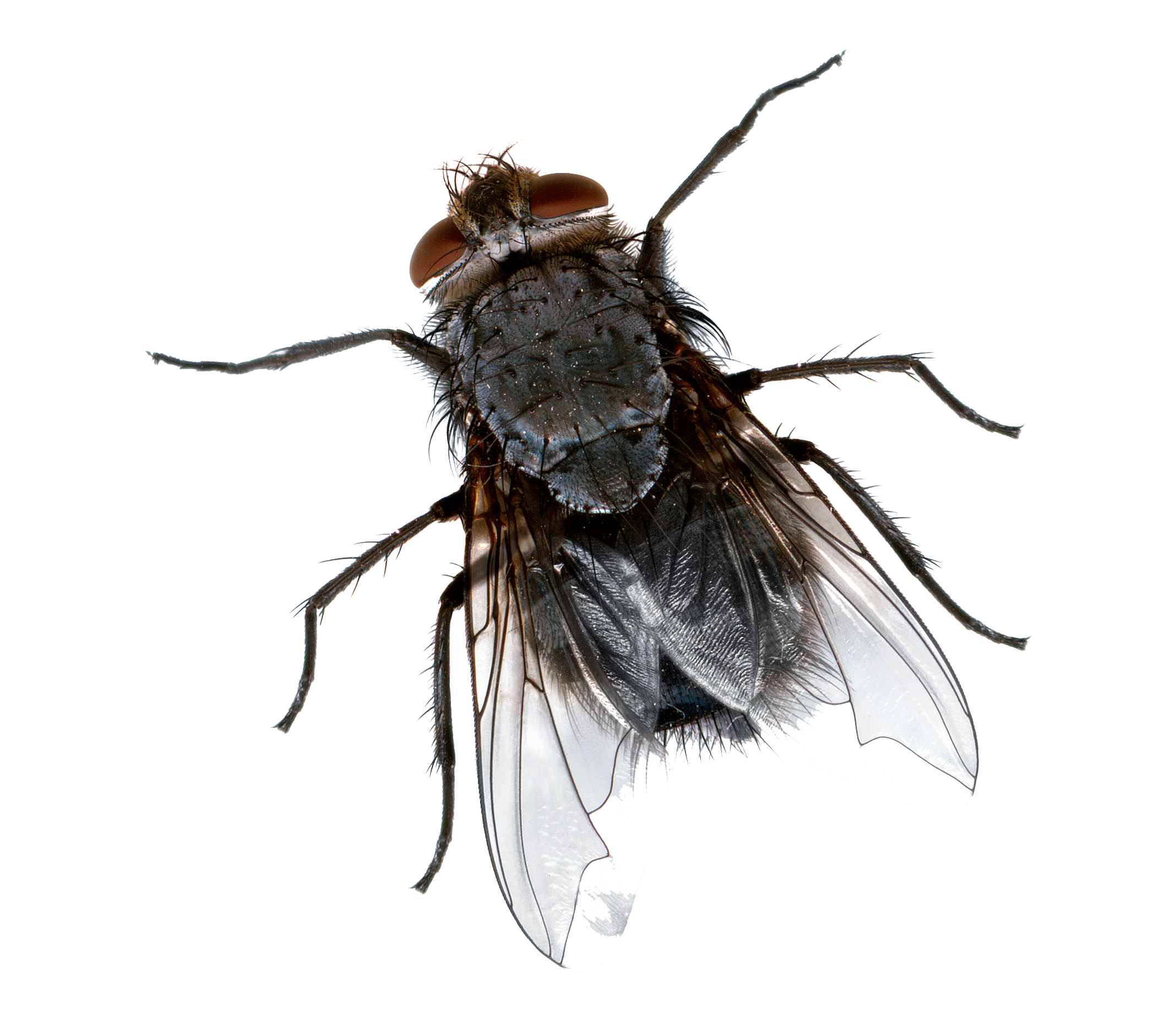fly png picture png mart #35354