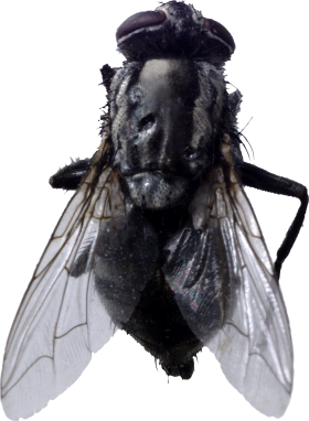 fly png transparent images #35363