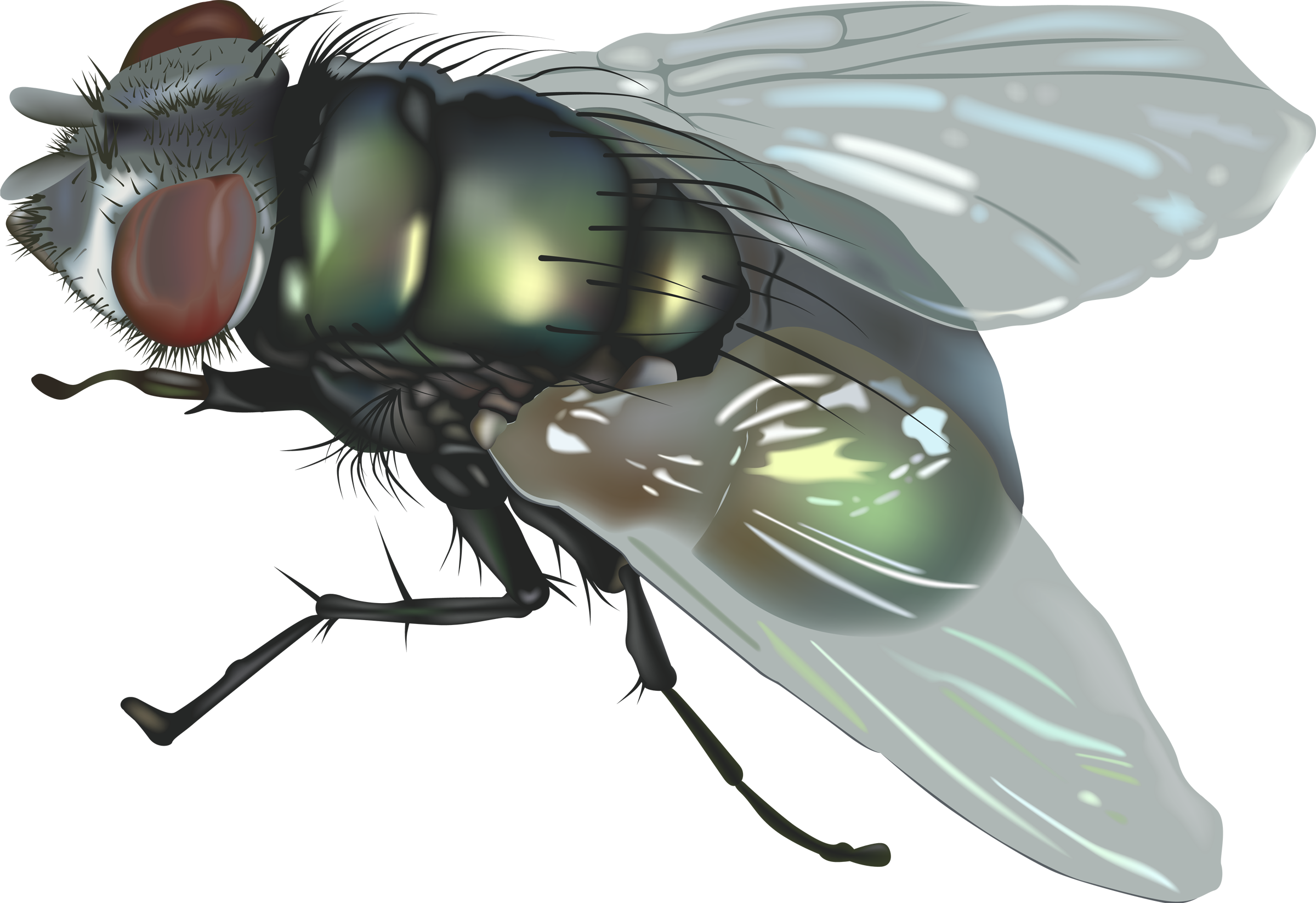 fly png transparent images #35368