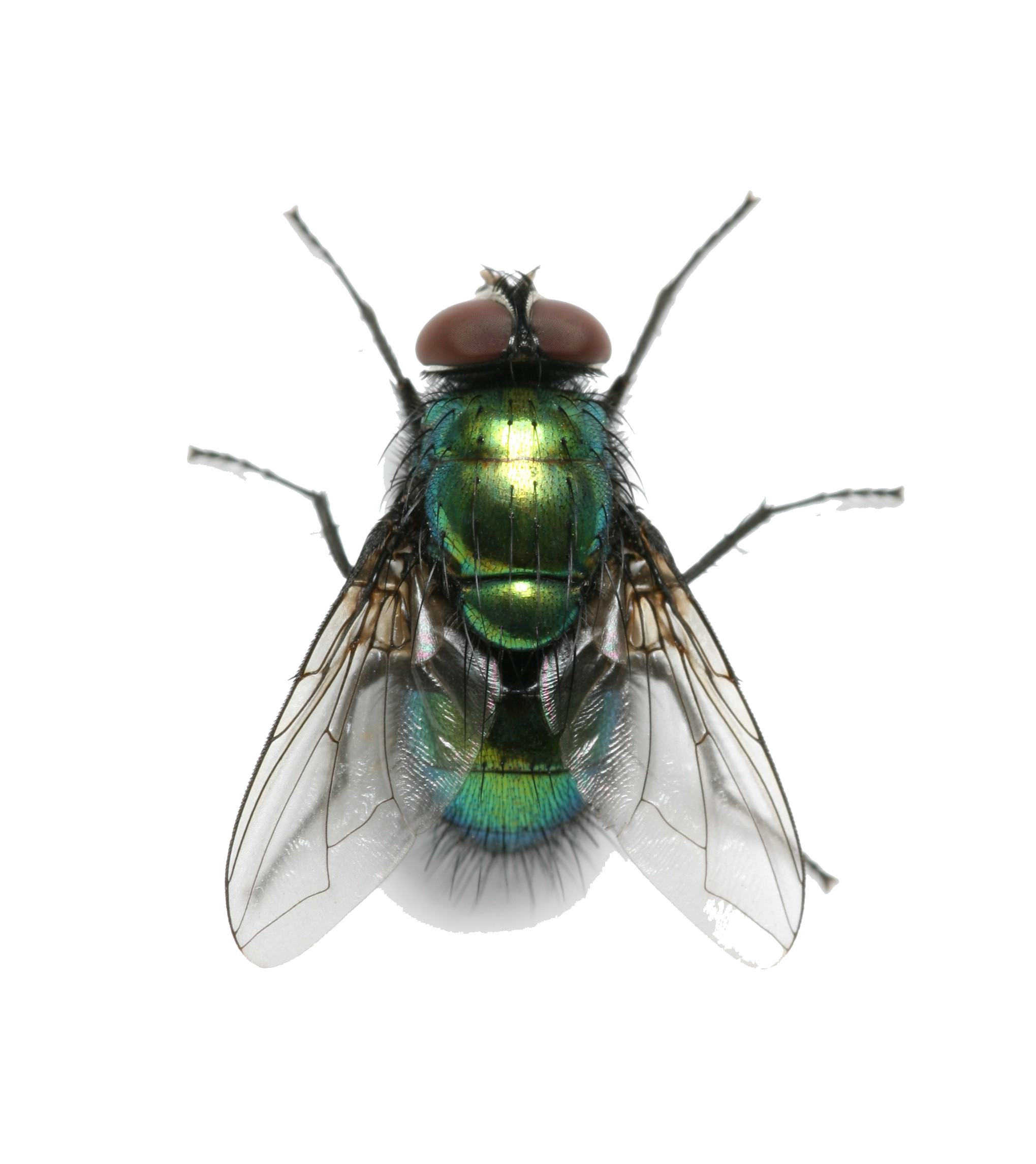 fly png transparent images download #35365
