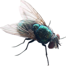 fly transparent background image #35344