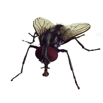 fly transparent png stickpng #35359