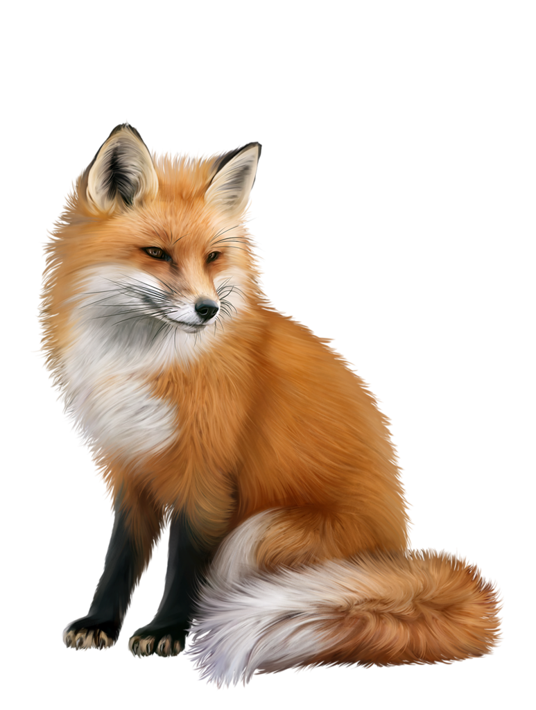 fox png png images pngio #28511