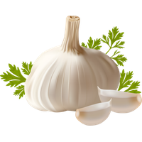 download garlic png photo images and clipart pngimg #25528